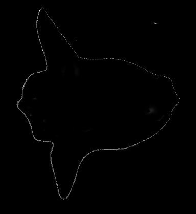 Splendid Mola